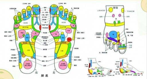 观察足部可以从中了解全身器官健康状况